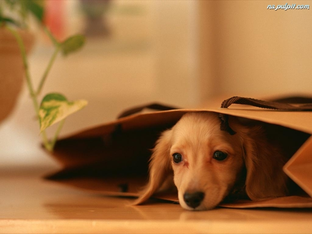 nice puppies wallpaper hd - photo #9